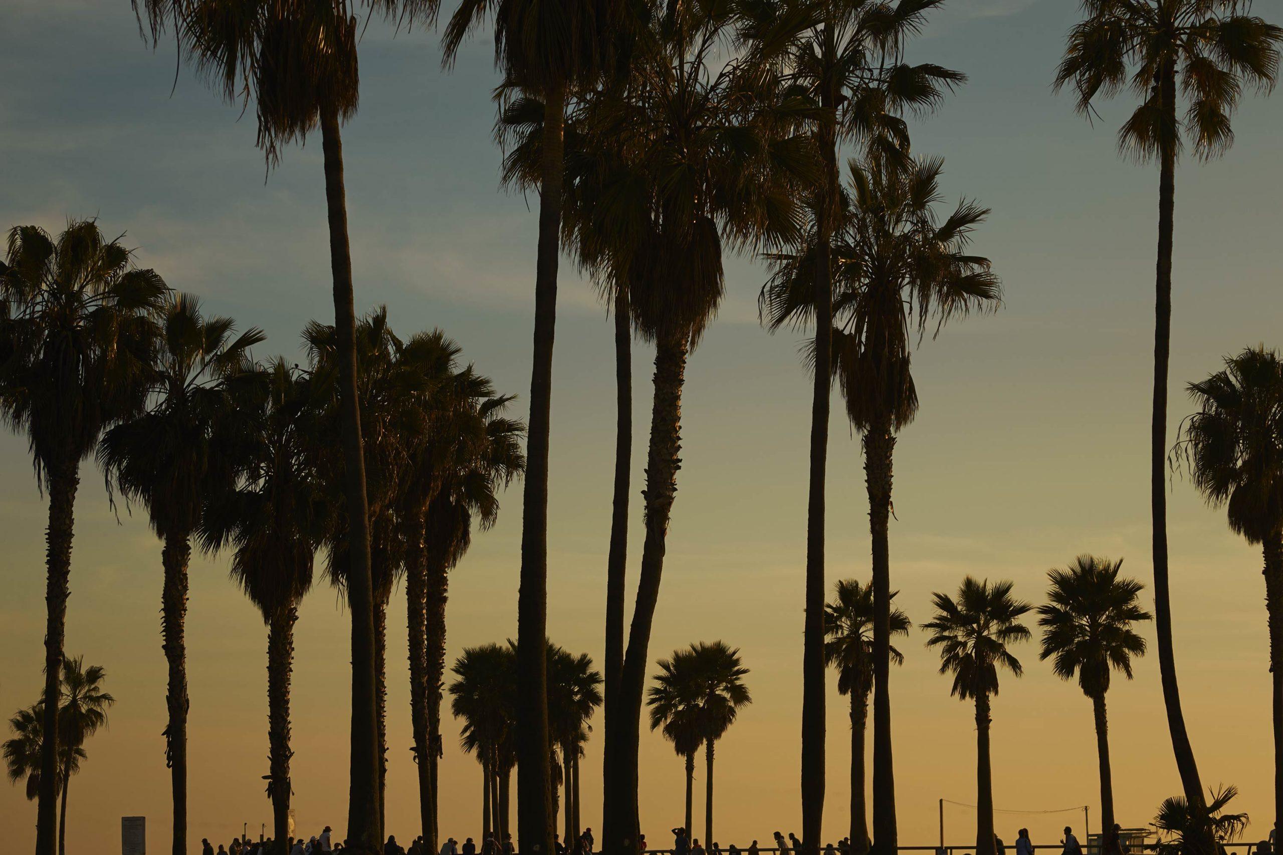 Palms - Skate Park, Venice Beach Collection - Fine Art Photography by Toby Dixon